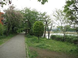 白幡緑道 白幡遊歩道