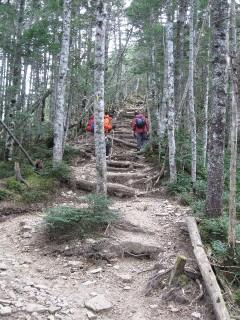 金峰山登山道の原生林